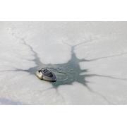 Антиобледенитель для пруда OASE Icefree Thermo 330 с термостатом